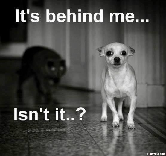 Dog-in-Terror